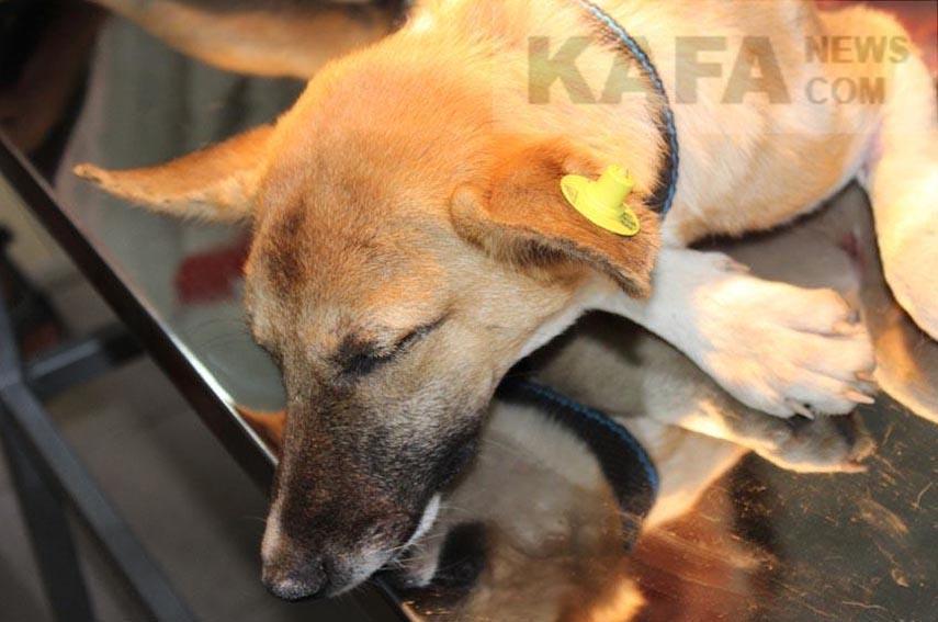 Фото новости - Беспризорные животные нуждаются в помощи феодосийцев