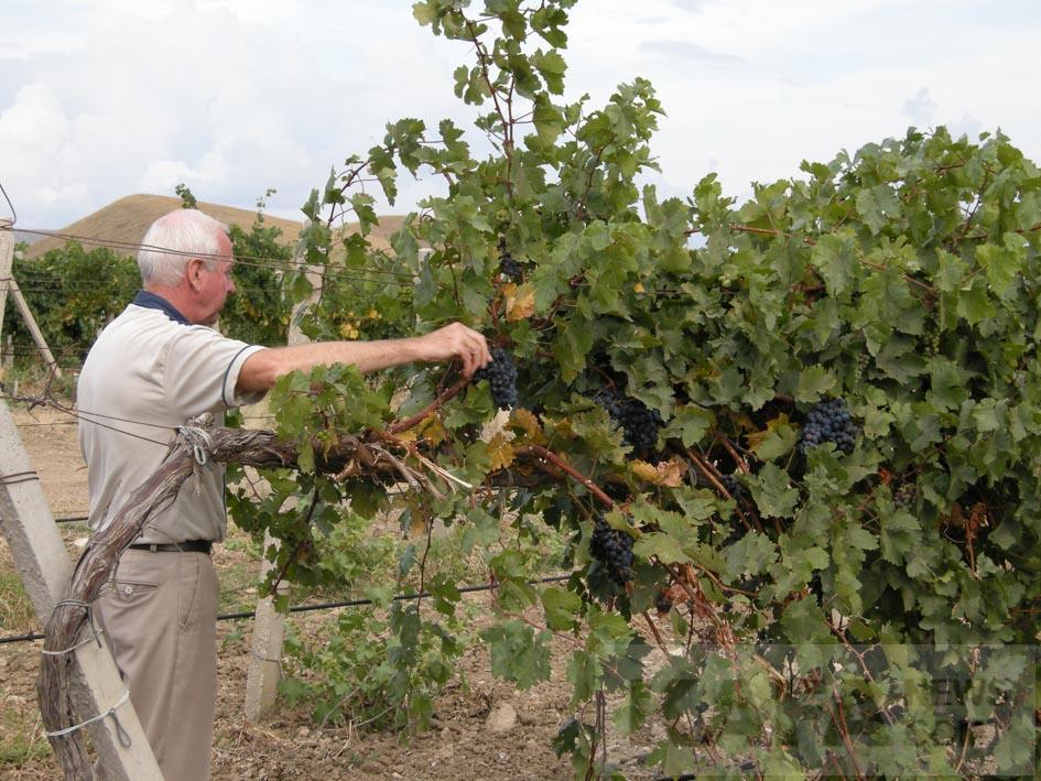 Фото новости - Дележ виноградных участков в Коктебеле погряз в судебных разбирательствах