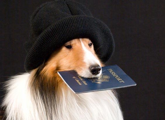 Фото новости - Домашних животных нужно регистрировать