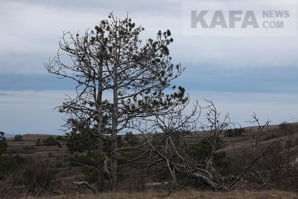 Фото - Экологическая катастрофа на Тепе-Оба