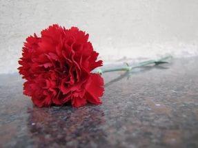 Фото новости - Феодосия присоединится к акции «Красная гвоздика»