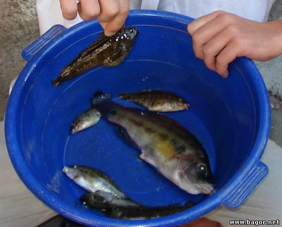 где ловят рыбу в симферополе