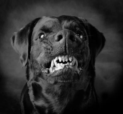 скачать через торрент черный пес