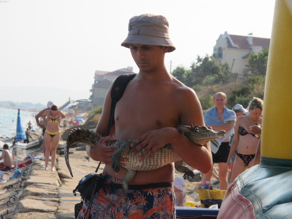 Министерство курортов Крыма проведет конкурс социальной рекламы в защиту животных