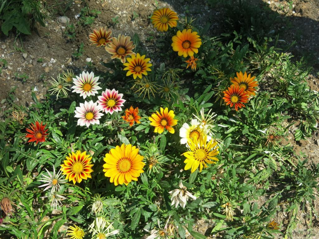 цветы крыма фото