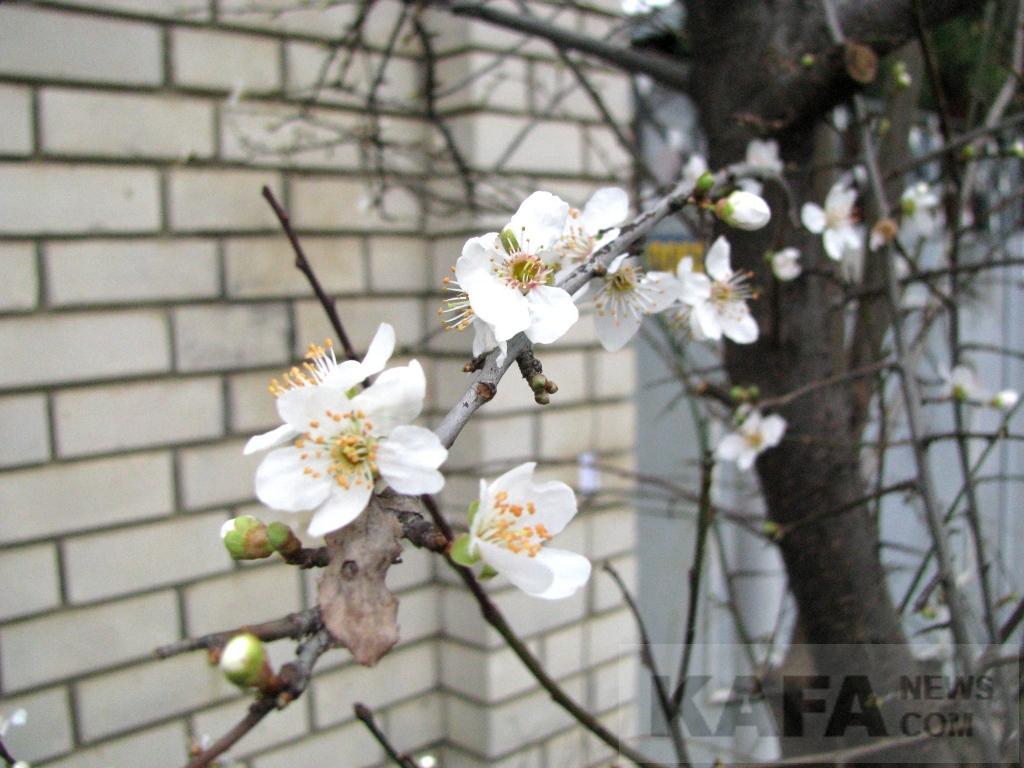 Фото - Коктебель в середине февраля