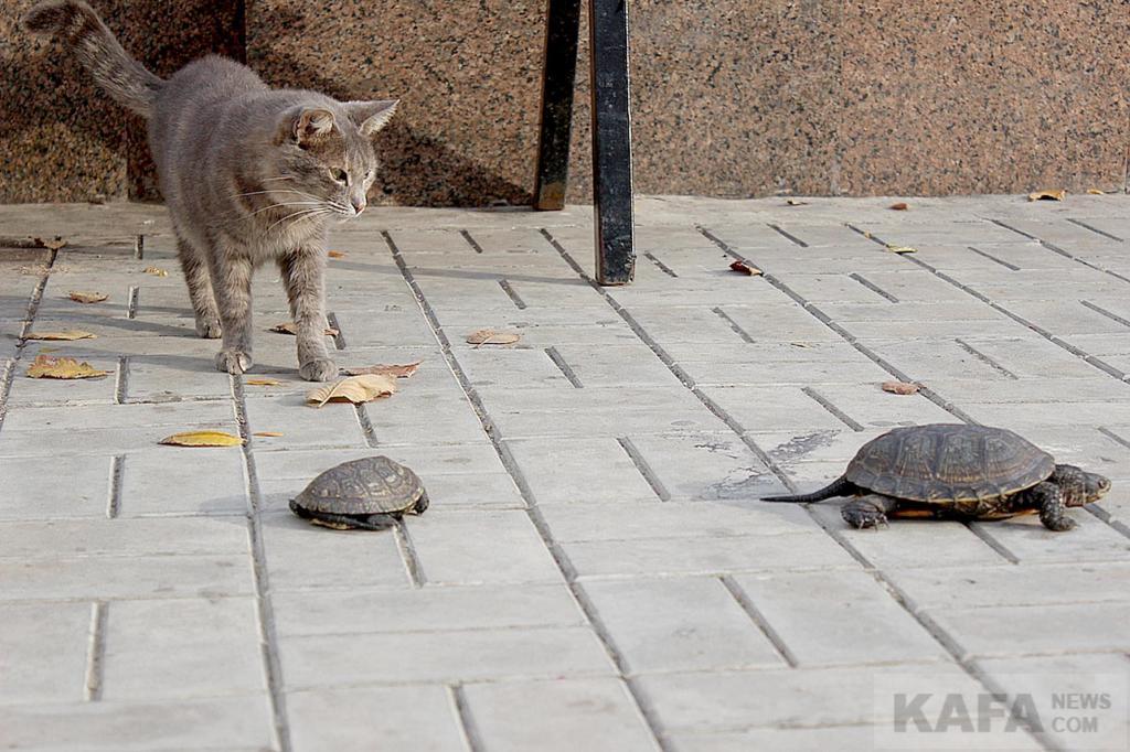 Фото новости - Коттебель – страна котов, и не только(фоторепортаж)
