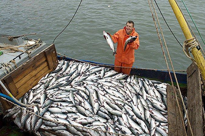 рыболовные производители крым
