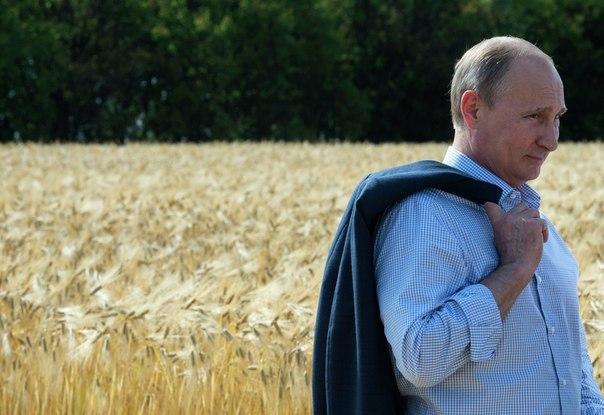 Путин: РФ вполне может стать крупнейшим производителем продовольствия вмире
