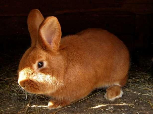 разведение кроликов в 2012