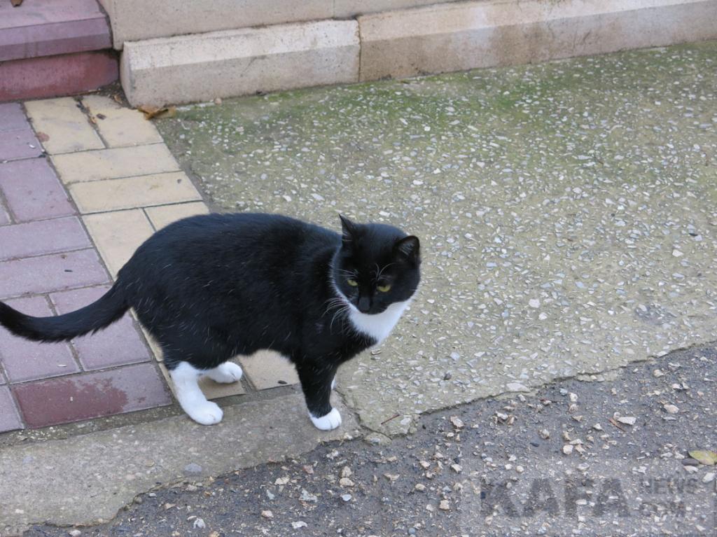 Фото новости - Твои кошки, Феодосия(фоторепортаж)
