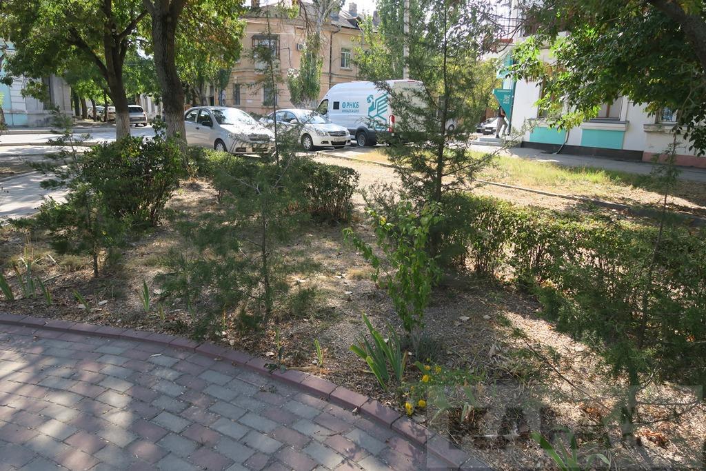 Фото - УГХиП администрации Феодосии призвали следить за регулярностью полива клумб
