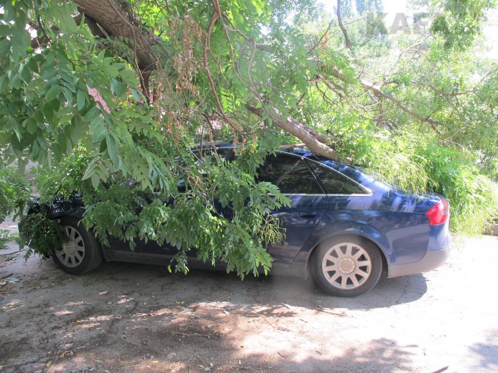 В Феодосии на ул.Челнокова дерево упало на машину ...: http://kafanews.com/novosti/107611/v-feodosii-na-ul-chelnokova-derevo-upalo-na-mashinu_2016-08-15