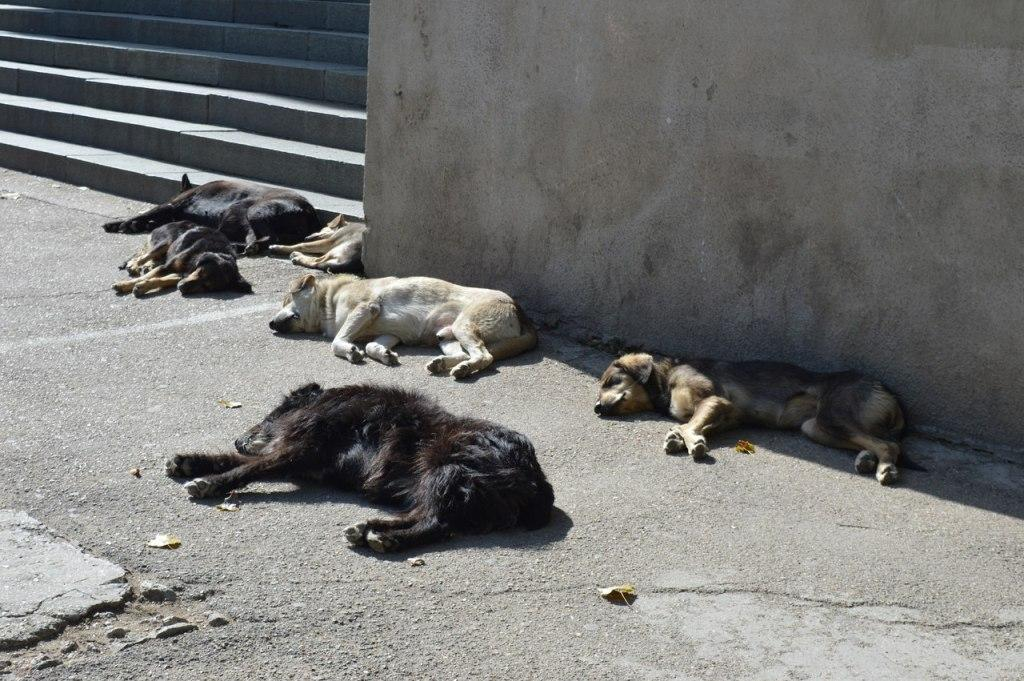 Картинки по запросу отлов собак фото
