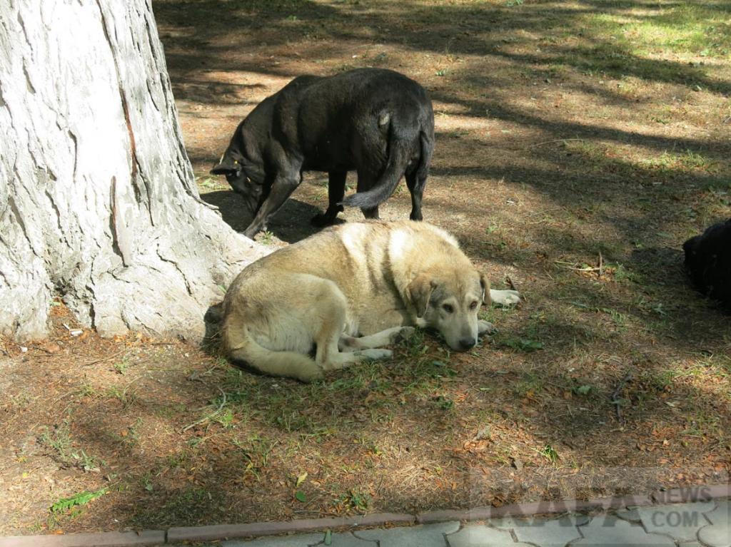 Фото новости - В Феодосии скоро начнут отлов бродячих собак