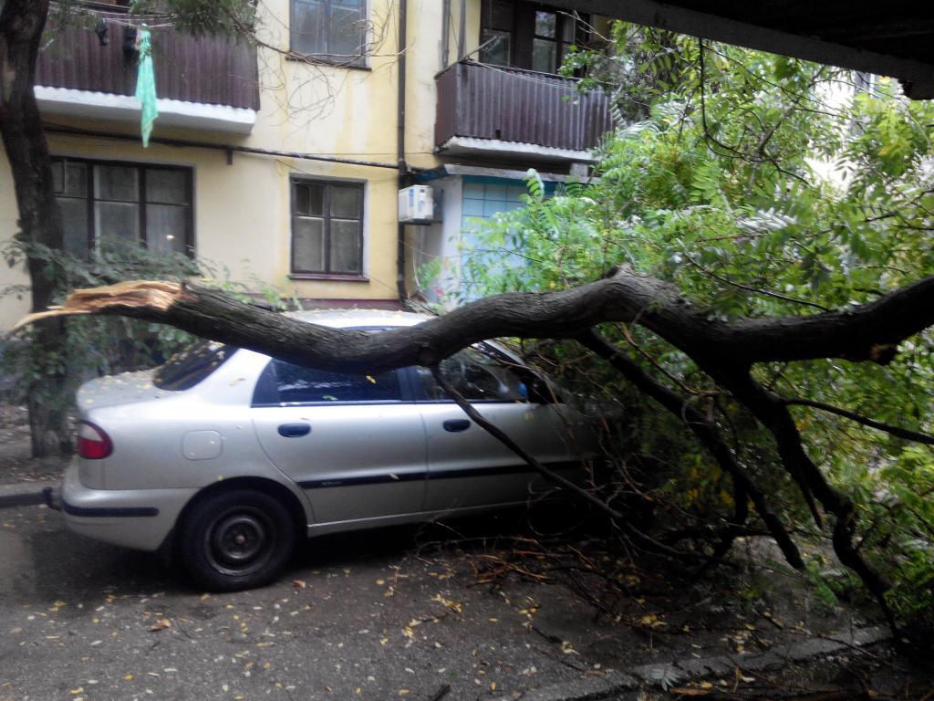 Куда звонить дерево упало на машину любых приключений