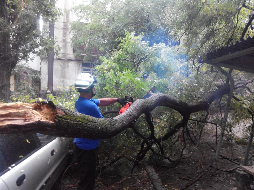 В Феодосии снова на машину упало дерево - информационный ...: http://kafanews.com/novosti/108683/v-feodosii-snova-na-mashinu-upalo-derevo_2015-09-09