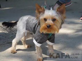 Фото новости - В Феодосии состоится выставка собак всех пород