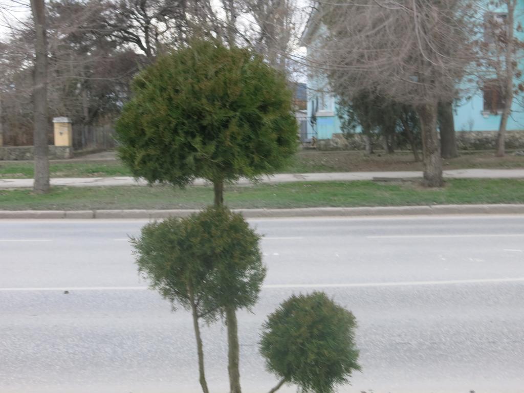 Фото - В Феодосии у чулочной фабрики опять высадили новые саженцы