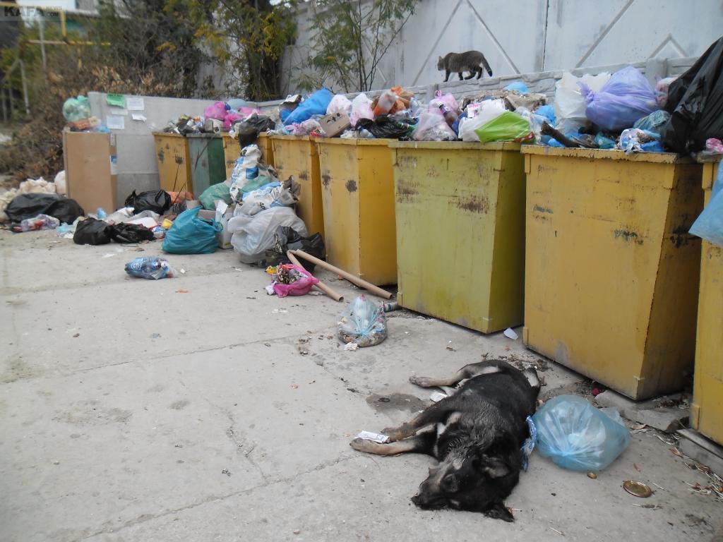 Фото новости - В Коктебеле проблемы с вывозом мусора
