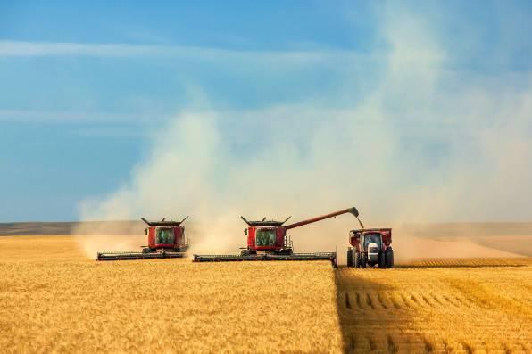 27июля вКрыму закончат убирать ранние зерновые