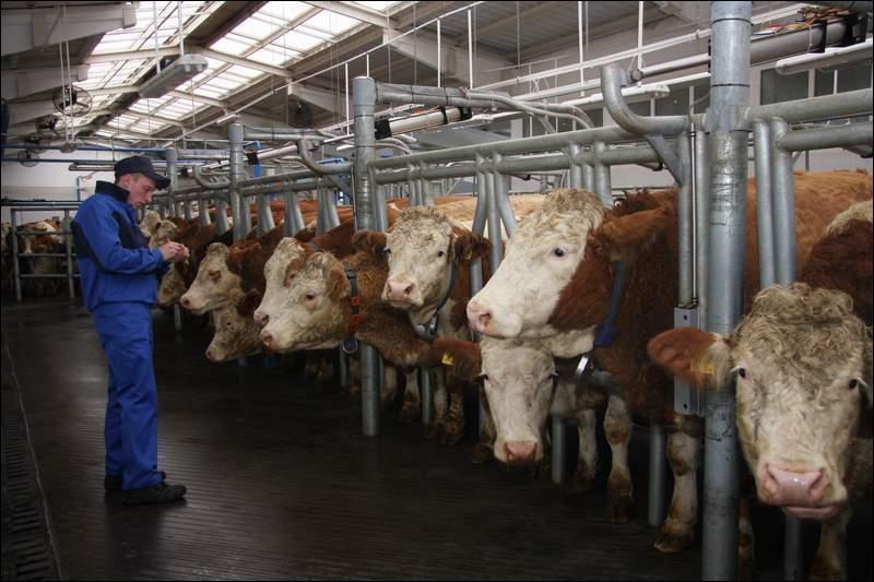 Власти Крыма одобрили строительство животноводческого комплекса за18 млрд руб.