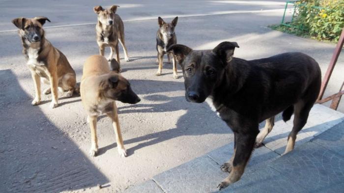 Стая бродячих собак растерзала мужчину вПодмосковье