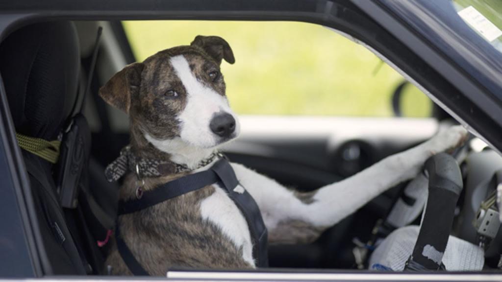 ВАмерике две собаки, оставшись одни вмашине, врезались встену магазина