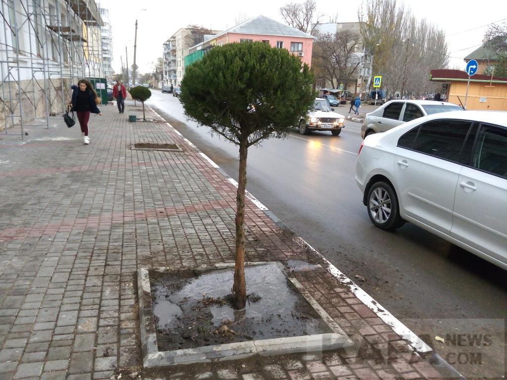 Фото новости - Вдоль чулочной фабрики высадили деревья(фоторепортаж)