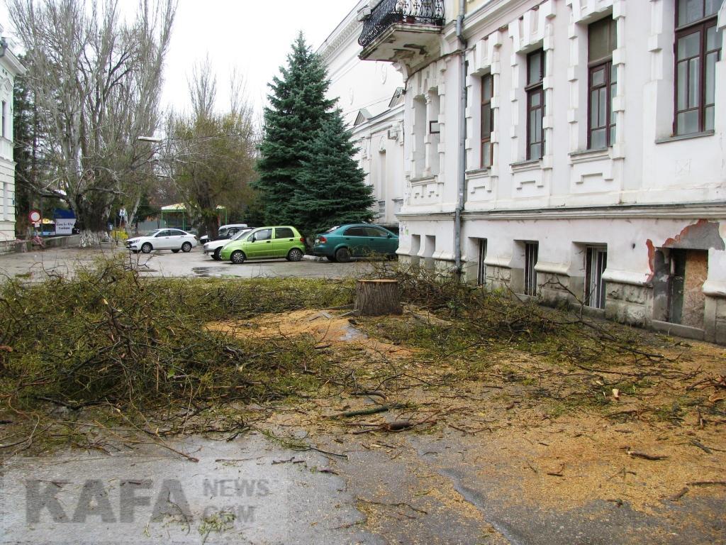 Фото - Возле феодосийского ЗАГСа спилили деревья