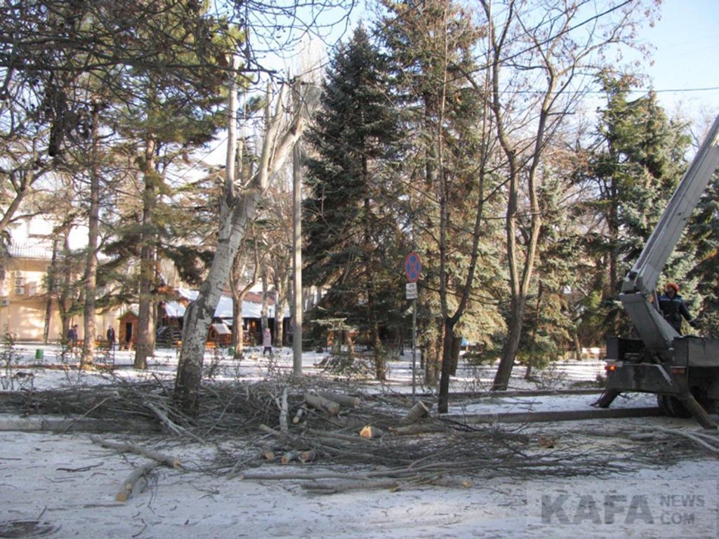 Фото новости - За зиму в Феодосии спилили уже полсотни деревьев