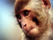 Сегодня в Крыму в зоопарке «Сказка» ветеринары снова будут усыплять обезьян