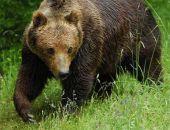 Медведи достойны своего парка в Крыму, — считает Олег Зубков