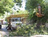 На улице Советской проводят обрезку деревьев:фоторепортаж
