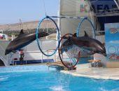 Дарья Цветкова: «Дельфины — это всегда позитивные эмоции»