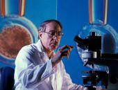 Найден источник клеток, продуцирующих инсулин