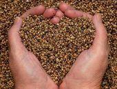 Чем полезны семена конопли