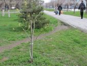 В администрации Феодосии планируют озеленять город