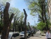 Власти Феодосии при обрезке деревьев допустили растрату 1,6 млн. бюджетных рублей, – прокуратура