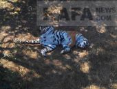 В Крыму зоопарк «Сказка» и парк львов «Тайган» закрыты и готовятся к переезду в другой регион РФ