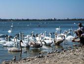 В Евпатории объявили конкурс на лучший проект плавающей кормушки для лебедей