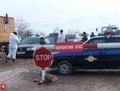В Крыму выявлено самовольное захоронение туш свиней, павших от АЧС