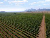 Сельское хозяйство и виноградарство в Крыму будут развивать итальянцы и африканцы