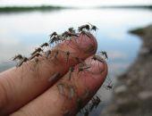 В столице Крыма коммунальные службы борются с комарами