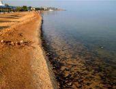 В Крыму в Азовском море массово гибнет рыба (фото, видео)