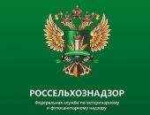 Одной из причин вспышки АЧС и болезни Ньюкасла в Крыму названа фиктивная вакцинация