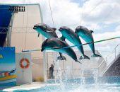 Дельфинарий «Коктебель» завершит сезон в конце сентября