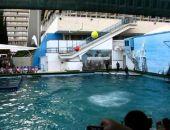 В Крыму могут закрыть на 90 дней ялтинский дельфинарий «Аквамарин» из-за нарушений
