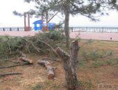 В Феодосии на набережной пилят деревья (дополнено):фоторепортаж