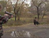 В Феодосии выловили более 300 бездомных животных